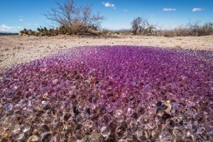 purple spheres (source: ca.news.yahoo.com)