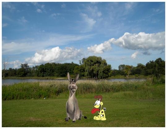 Donkey - Odie