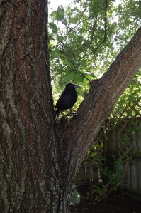 Quoth the raven 'Never was'