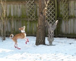 Dewey hunting squirrels