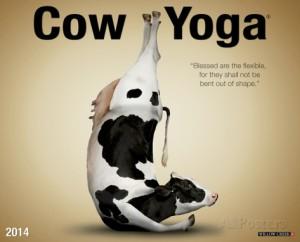 Cow Yoga