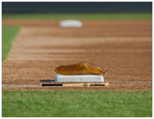 The best in his league, it took Louis Ville Slug nearly 12 hours to get to first base, assuming no one stepped on him.