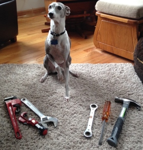 Some female dogs have tools, too