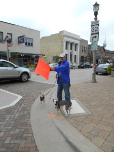 Step 3: Hold the flag out, look both ways and begin crossing the street