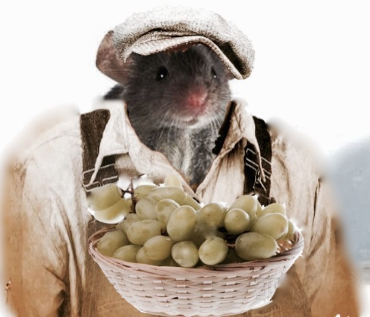 The Grapes of Rat