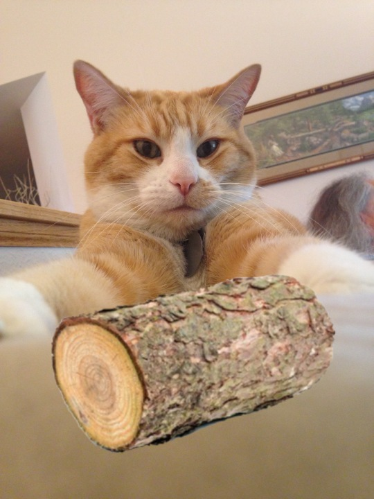 A cat, a log