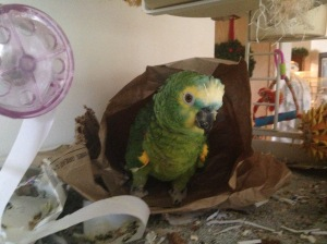 My real live bird in a bag