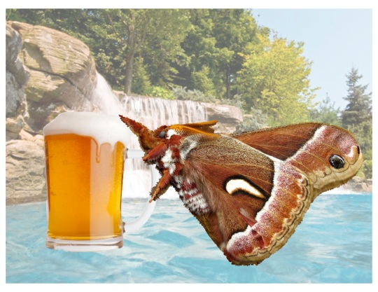 This Miller prefers hairy moth beer